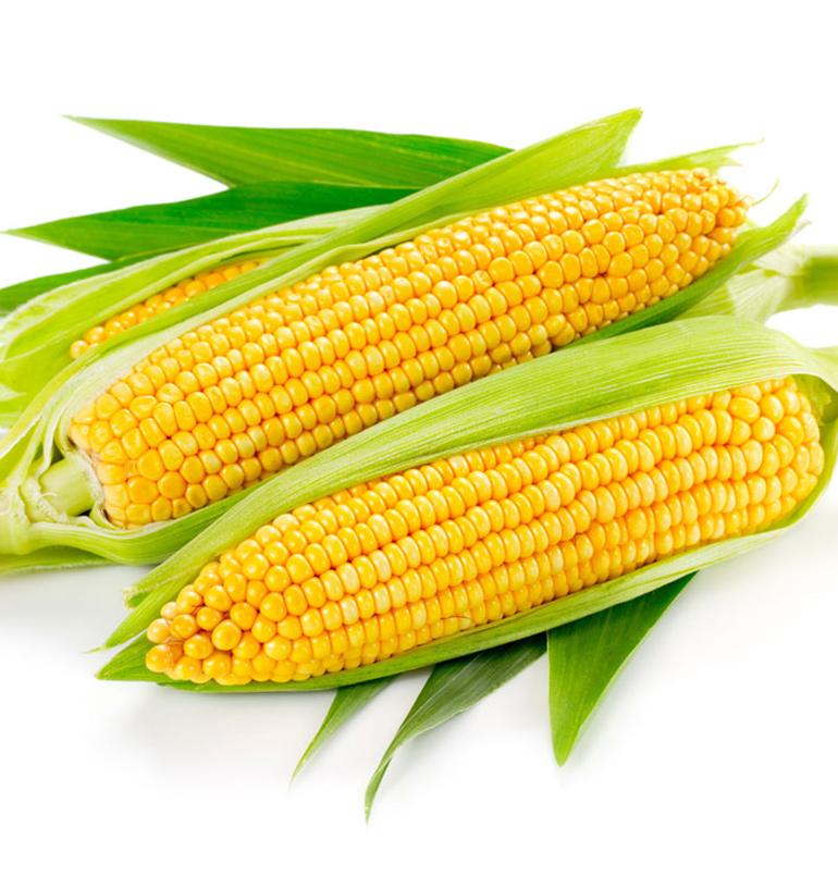 玉米(单色)